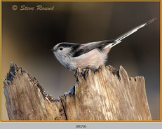 long-tailed-tit-70.jpg