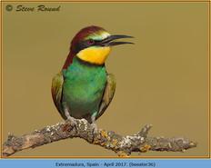bee-eater-36.jpg