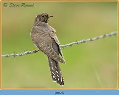 cuckoo-29.jpg
