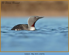 red-throated-diver- 75.jpg