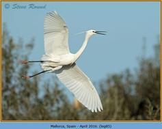 little-egret-85.jpg