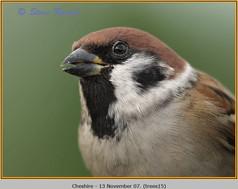 tree-sparrow-15.jpg