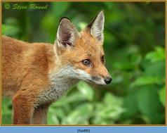 fox-89.jpg