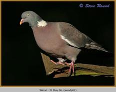 wood-pigeon-01.jpg