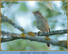 nightingale-06.jpg
