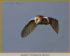barn-owl-27.jpg