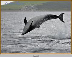 bottlenose-dolphin-02.jpg