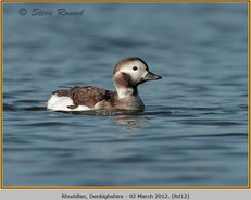 long-tailed-duck-12.jpg