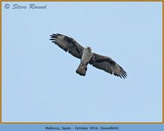 bonelli's-eagle-04.jpg