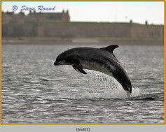 bottlenose-dolphin-03.jpg