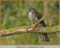 cuckoo-07.jpg