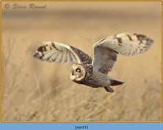 short-eared-owl-72.jpg