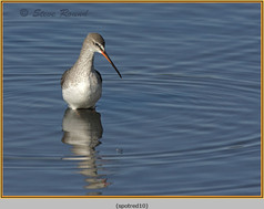 spotted-redshank-10.jpg