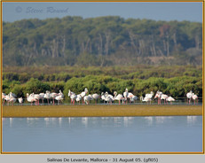 greater-flamingo-05.jpg