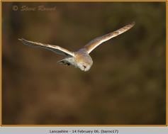 barn-owl-17.jpg
