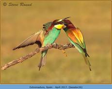 bee-eater-26.jpg