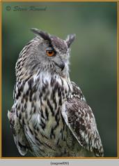 eagle-owl-09c.jpg