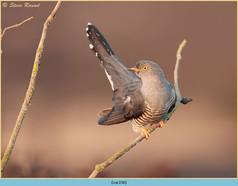 cuckoo-156.jpg