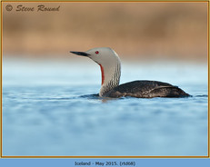 red-throated-diver- 68.jpg