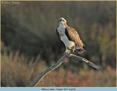 osprey-55.jpg