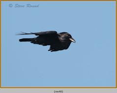 raven-40.jpg