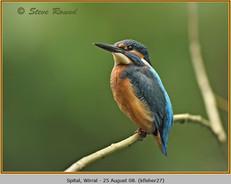 kingfisher-27.jpg