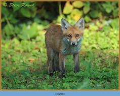 fox-98.jpg