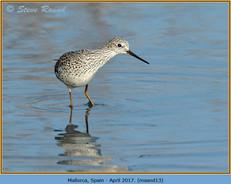 marsh-sandpiper-13.jpg