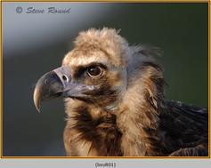 black-vulture-01c.jpg