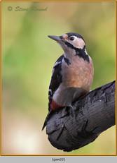 gt-s-woodpecker-22.jpg