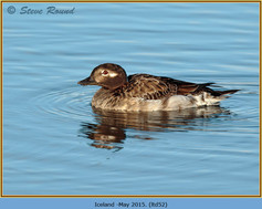 long-tailed-duck-52.jpg