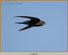 swift-23.jpg