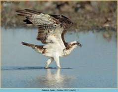 osprey-51.jpg