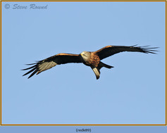 red-kite-89.jpg