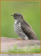 cuckoo-06.jpg