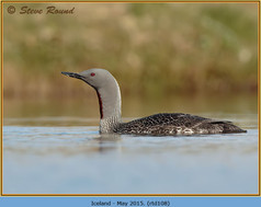 red-throated-diver-108.jpg