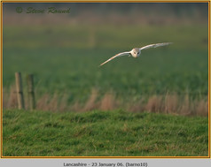 barn-owl-10.jpg