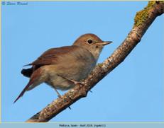 nightingale-11.jpg