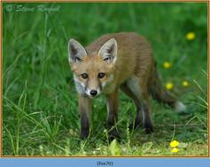 fox-70.jpg