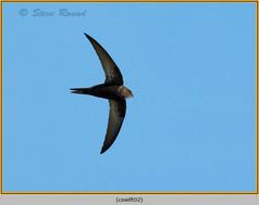 swift-02.jpg