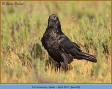 raven-58.jpg