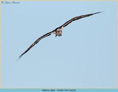 osprey-35.jpg