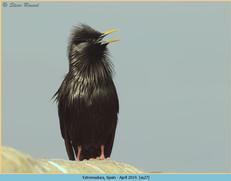 spotless-starling-27.jpg