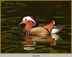 mandarin-40.jpg