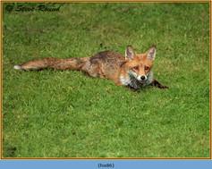 fox-86.jpg