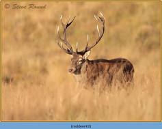 red-deer-43.jpg