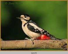 gt-s-woodpecker-20.jpg