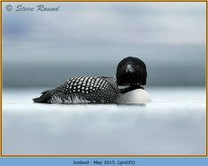 great-northern-diver-35.jpg