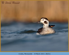 long-tailed-duck-31.jpg