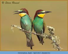 bee-eater-31.jpg